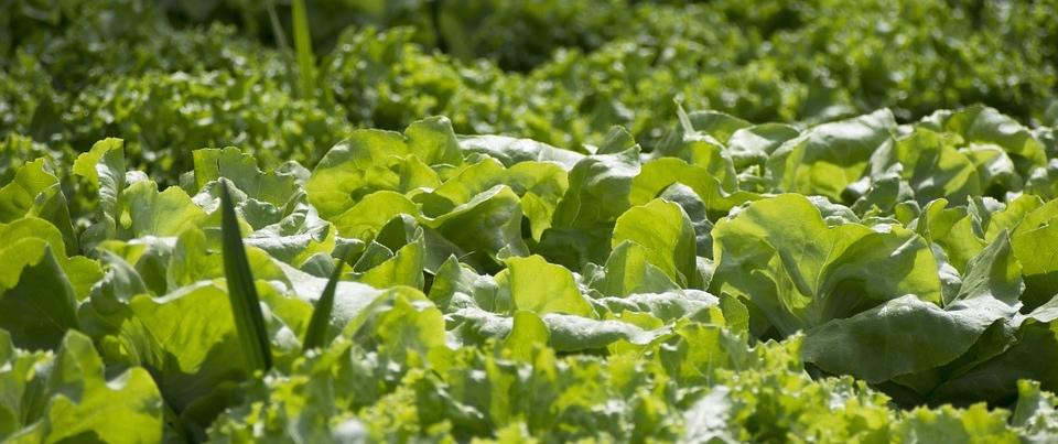 vegetables-861357_960_720 (1)